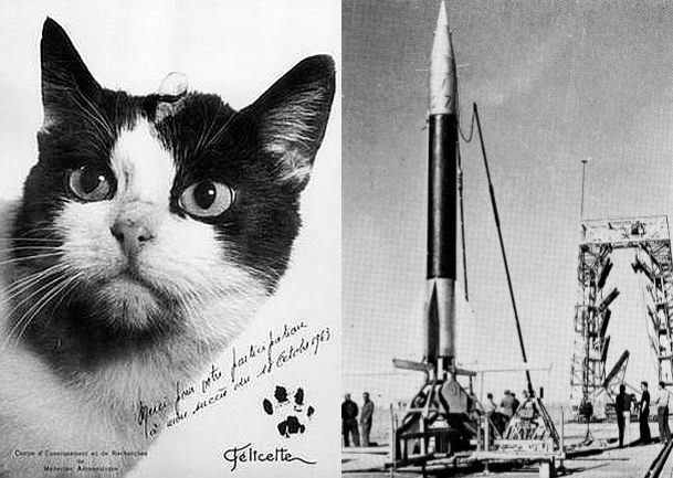 The first cat in space, Félicette and a rocket of the type used to launch her on her mission.